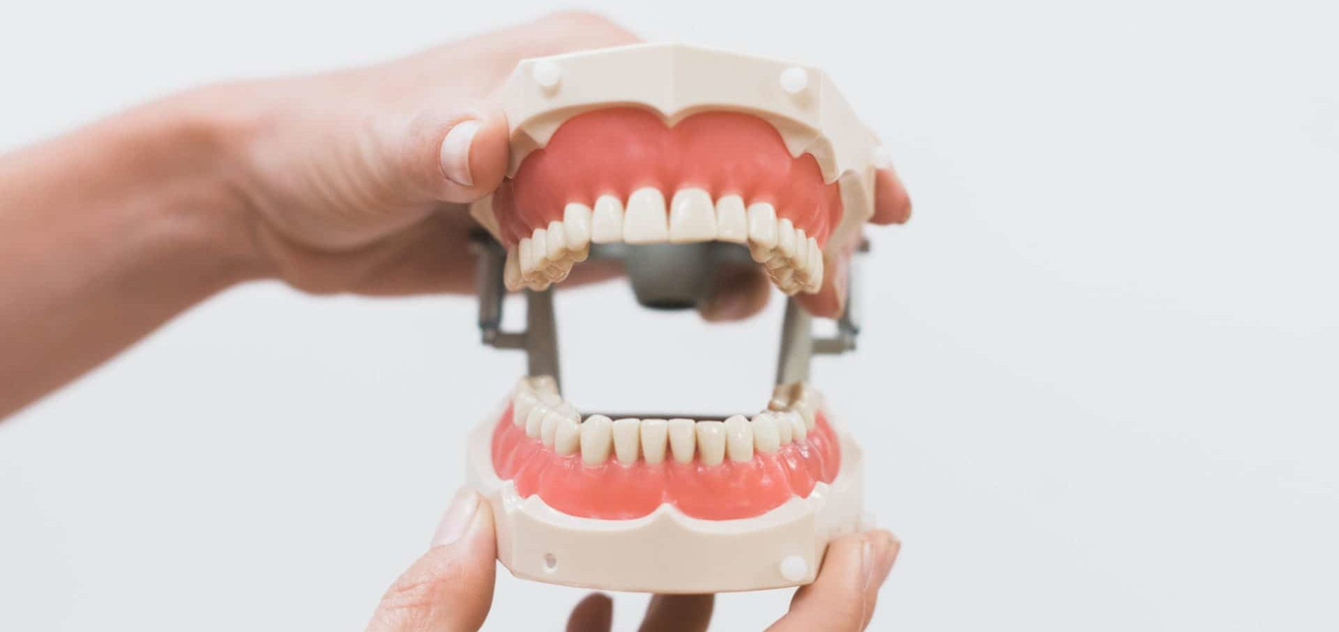 full set of teeth, denture model